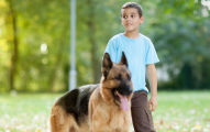 Boy and German Shephard Image