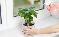 House Plant Edited