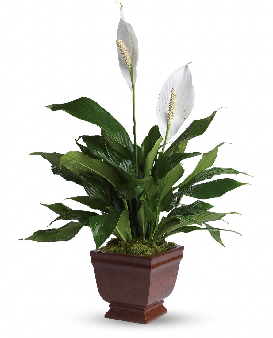 Best house plants for House plants