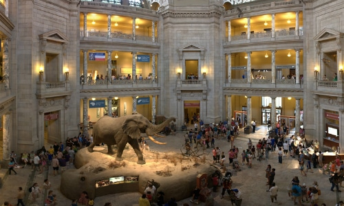 Smithsonian National Museum of Natural History Washington D